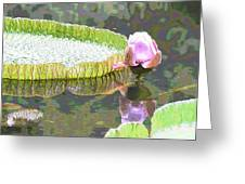 Victoria Lily Bloom 2 Greeting Card