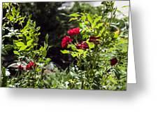 Victoria Park-5 Greeting Card