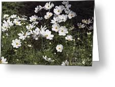 Victoria Park-6 Greeting Card