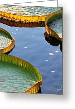 Victoria Waterlilies Greeting Card