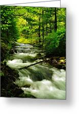 Viento Creek In June Greeting Card