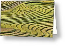 Vietnam Sapa Iv Greeting Card