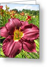 Viette's Daylily. Dark Purple 01 Greeting Card