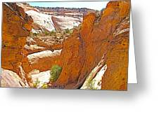 View From Above Capitol Gorge Pioneer Trail In Capitol Reef National Park-utah Greeting Card