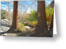 View From Creek Bed In Andreas Canyon In Indian Canyons-ca Greeting Card