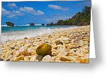 View From The Coconut Greeting Card