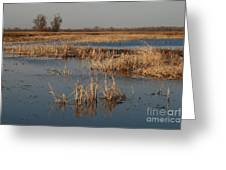 View From The Duck Blind Greeting Card