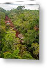 View Of Cano Cristales In Colombia Greeting Card