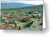 View Of Desert Wild Flowers And Cacti Greeting Card