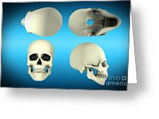 View Of Human Skull From Different Greeting Card