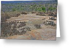 View One From Matekenyane In Kruger National Park-south Africa Greeting Card