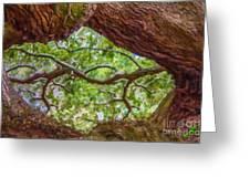 View Through Angel Oak Tree Greeting Card