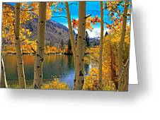 View Through The Aspens Greeting Card