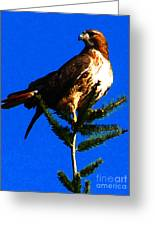 Vigilant Hawk Greeting Card