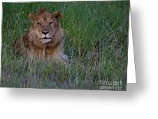 Vigilant Lion Greeting Card
