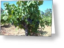 Villa Toscano Vineyards Greeting Card