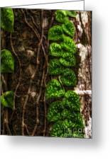 Vine Growing On Tree Greeting Card by Al Andersen
