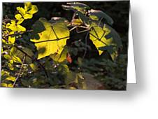Vine Leaves At Sunset Greeting Card