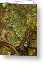 Vine On Tree Bark Greeting Card
