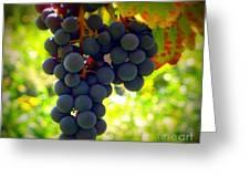 Vine Purple Grapes  Greeting Card