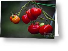 Vine Ripe Goodies  Greeting Card by Marvin Spates