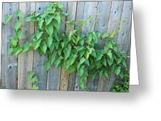 Vine Through The Fence Greeting Card