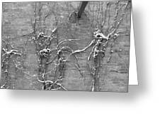 Vines After Snow In Black And White Greeting Card