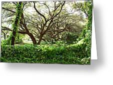 Vines And Oaks Greeting Card