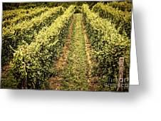 Vines Growing In Vineyard Greeting Card by Elena Elisseeva