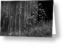 Vines On The Shed Greeting Card