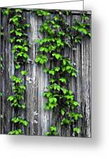 Vines On The Side Of A Barn Greeting Card