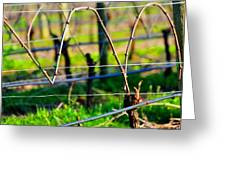 Vines On Wire 22637 Greeting Card