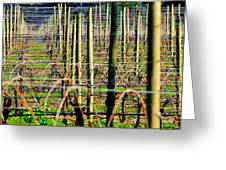 Vines Poles 22649 Greeting Card