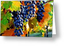 Vineyard 2 Greeting Card