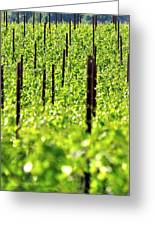 Vineyard 24056 Greeting Card
