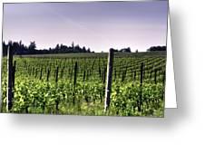 Vineyard 24077 Greeting Card