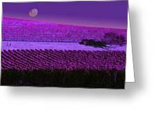 Vineyard 40 Greeting Card