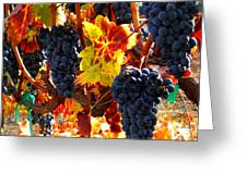 Vineyard 8 Greeting Card