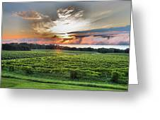 Vineyard At Sunrise Greeting Card by Steven Ainsworth