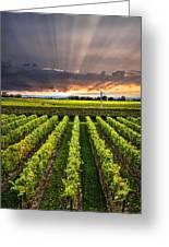 Vineyard At Sunset Greeting Card