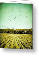 Vineyard Greeting Card by Colleen Kammerer
