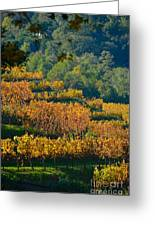 Vineyard Fall Greeting Card