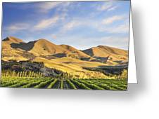 Vineyard In Canterbury New Zealand Greeting Card