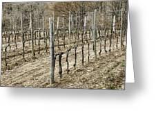 Vineyard In Early Spring Greeting Card