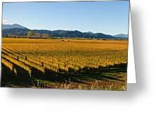 Vineyard In Nz Greeting Card