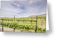 Vineyard Landscape In Maryhill Washington State Greeting Card