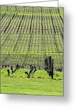 Vineyard Lines 23036 Greeting Card
