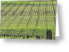 Vineyard Lines 23048 Greeting Card