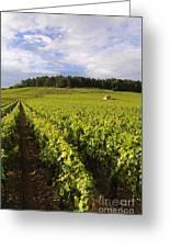 Vineyard Near Monthelie. Burgundy. France. Europe Greeting Card