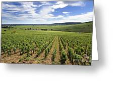 Vineyard Of Cotes De Beaune. Cote D'or. Burgundy. France. Europe Greeting Card